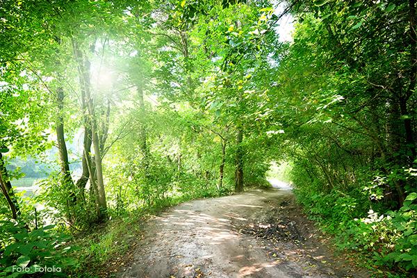 Waldweg durch lichtdurchfluteten Laubwald Bewegung